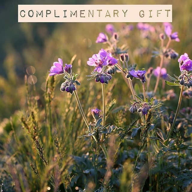 FRAGRANCE FRIDAY 🌱 RECEIVE A COMPLIMENTARY GERANIUM CANDLE IN OUR REUSABLE KILNER JAR WHEN YOU SPEND OVER £50 ONLINE OR IN OUR SHOP AT 70 BURLINGTON ARCADE, LONDON.  OFFER AVAILABLE UNTIL 7TH JULY AND WHILE STOCKS LAST  PRESS LINK IN BIO 🌱 Geranium has been making our summers brighter since the 17th century and is now an essential in the English garden. With their pink and purple blossoms and beautiful scent, the rose geranium is our absolute favourite so it is no surprise that we have paired sweet rose geranium with the freshness of mint and green leaves to capture the fragrance of an English Garden during the height of summer 🌱 FRAGRANCE NOTES: TOP NOTES: FRESH MINT LEAVES MIDDLE NOTES: ROSE GERANIUM, GREEN STEMS BASE NOTES: GERANIUM 🌱 #Geranium #Chandler #WeMake #OurOwnFactory #OurOwnPeople #NoShortcuts #NaturalProducts #EssenceOfEngland #FinestIngredients #SustainableManufacturer  #EcoFactory #Maker #CarbonNeutral #TrueGraceMoments #EssenceOfEngland #SustainableDesign #MadeInEngland #greatbritishbrands #ecoliving