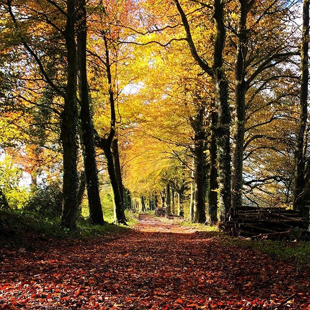 Beautiful Autumn walk in the Countryside.